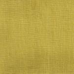 Daspe 14 yellow