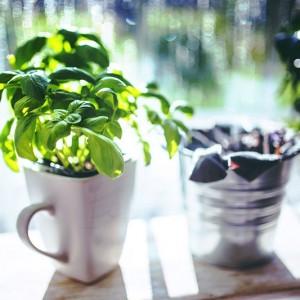 Ako sa starať o bylinky v zime